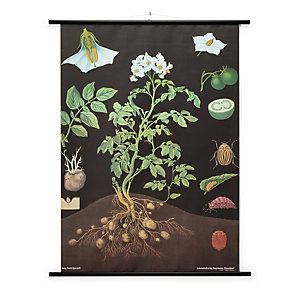 School Wall Map Printed Canvas, Potato