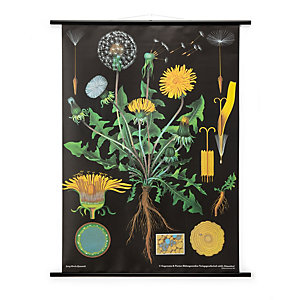 School Wall Map Printed Canvas, Dandelion