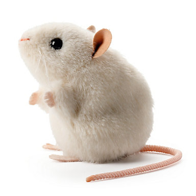 koesen-white-mouse