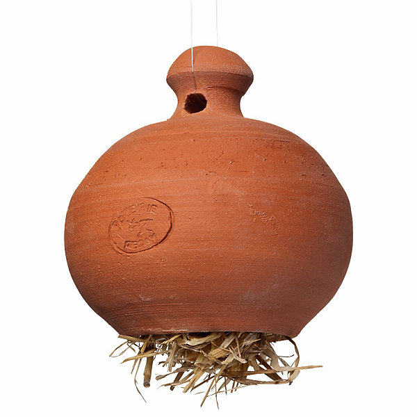Terracotta Earwig Pot