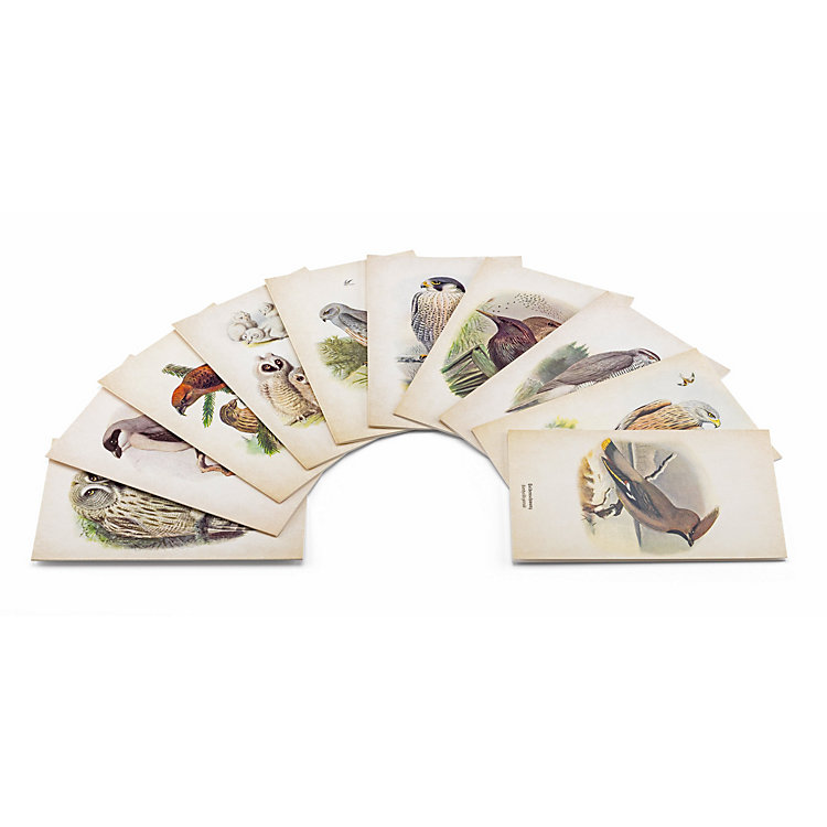Folding Cards with Bird Motifs