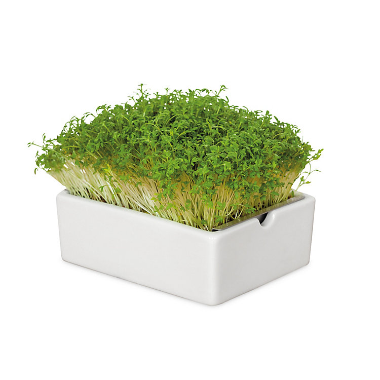 Microgreens Kit for the Cultivation of Sprouts